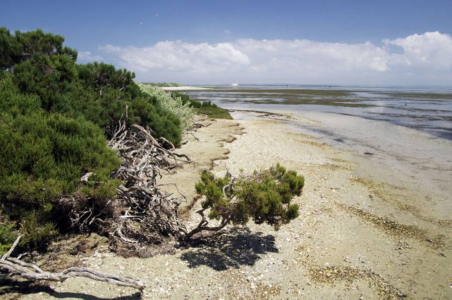 Mud Island shoreline